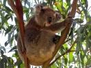 Melbourne Meningie