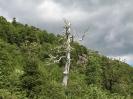Von Bariloche nach Villarica_12