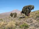 Von Colchane nach Arica_1