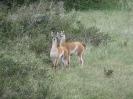 Von Puerto Natales zum Parque National Torres del Paine_9