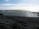 Von Punta Arenas nach El Calafate_8